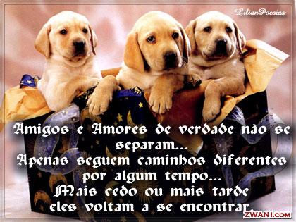 z-amigos50.jpg